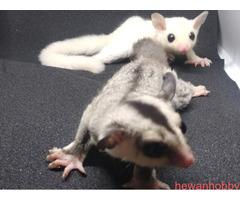 jual baby hewan - Gambar 2