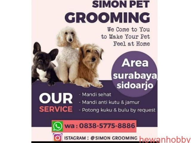 Simon grooming panggilan - 1